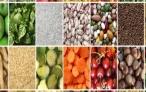 La biodiversità del disordine agricolo italiano